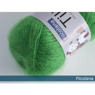 Tilia juciy green